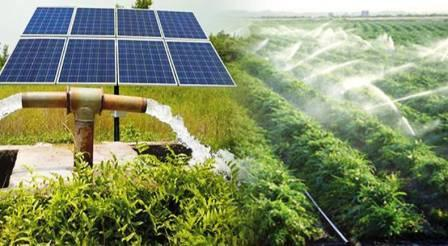 The future of farming and Solar PV